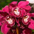Atlanta Botanical Garden: Fuqua Orchid Center — orchid — UID